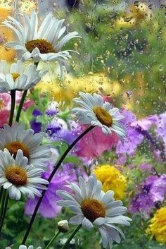 Find images and videos about nature, flowers and daisy on We Heart It - the app to get lost in what you love. Spring Flowers, Wild Flowers, Rain Flowers, Floral Flowers, Florals, Beautiful Flowers, Beautiful Pictures, Daisy Love, Flower Photos