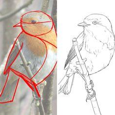 am heißesten Foto vogel Zeichnung Kunsthandwerk Rezept Le dessin d'un rouge gorge étape par étape. Retrouvez l'article comple… – Bird Drawings, Easy Drawings, Animal Drawings, Drawing Birds, Sketch Painting, Drawing Sketches, Bird Sketch, Art Watercolor, Bird Art