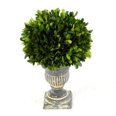 Preserved Boxwood Topiary, 12 in.   Kirklands Make - use urn I have w/flowers or greenery
