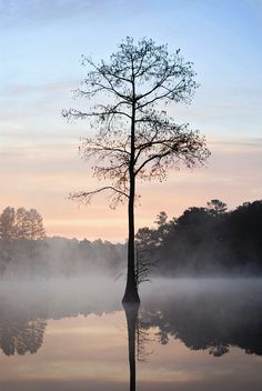 Experience the beauty of Grand Cypress trees at Trap Pond State Park.