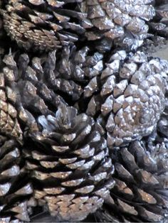 Silver pine cones, going to be collecting pinecones all summer and fall!!