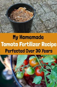 My Tomato Fertilizer Recipe Perfected Over 30 Years - - I've been growing tomatoes for years. This is my go-to recipe for making organic tomato fertilizer for delicious and bountiful tomatoes. Vegetable Garden Planning, Home Vegetable Garden, Tomato Garden, Veggie Gardens, Tomato Tomato, Growing Tomatoes, Growing Vegetables, Growing Tomato Plants, Organic Bone Meal