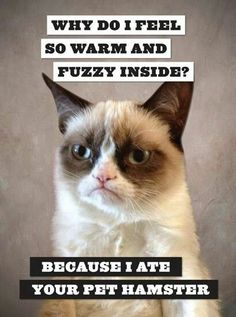 All clear? http://catpictures24.com/grumpy-cat/ #AngryCat, #AngryCats, #GrumpyCat, #GrumpyCatPic, #GrumpyCatPictures, #GrumpyCats