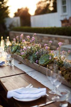 We're Suckers for Succulents