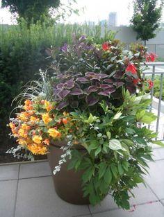 Shade Container Planting - Coleus, Cape Fuchsia, Begonias