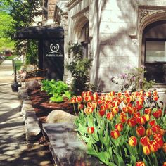 Beautiful #spring landscape at The Majestic Hotel #chicago