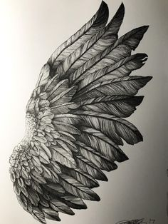 Drawing of wings, pen wing study, micron sketch illustrate doodle in 2019 т Eagle Wings, Bird Wings, Eagle Wing Tattoos, Tattoo Drawings, Art Drawings, Angel Wings Drawing, Phoenix Drawing, Wings Sketch, Wing Tattoo Designs