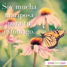 Soy mucha mariposa para tu estómago. #FraseDelDia #Frase #EnviaFlores