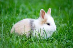 Mastitis en conejos: Síntomas y tratamiento