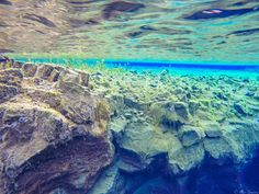 Never have I ever seen water as clear as the glacial melted and lava filter waters of Silfra in Thingvellir (Þingvellir) National Park during my snorkling excursion. || #AlexTonettiPhotography #Photography