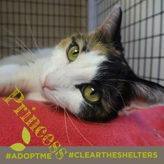 July 23rd is Clear the Shelters day. We're sharing adoptable animals now through the end of the month! Lets clean those shelters out of cuties like these!  This particular cutie is named Princess, clearly she deserves to be a pampered lap cat. You'll find her with our friends Feline Rescue, Inc.! Visit their site for more details!