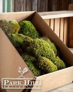 Park Hill Collection's natural air-dried Mood #Moss is a decorating essential.