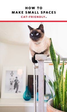 Cats who live in apartments face one very serious threat: boredom. Cat behavior problems—aggression, waking owners up in the middle of the night, obsession with food, and more—can often be traced back to a simple lack of stimulation. Though cats are often considered to be low maintenance pets, most do need some form of entertainment and activity each day. Here are a few ideas for how to make your apartment a veritable kitty playground.