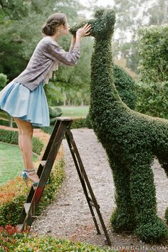 Large animal topiaries