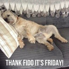 If it's been a long week don't worry the weekend starts here! Happy #Friday from everyone at Barking Mad Dog Care