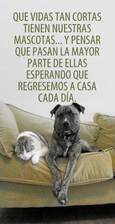 frases para perritos muertos para reflexionar Amor Animal, Mundo Animal, Cocker Spaniel, I Love Dogs, Puppy Love, Yorkie, Chihuahua, Animals And Pets, Cute Animals