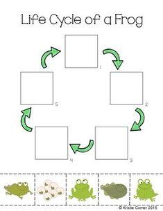 Frog Life Cycle Cut and Paste Worksheet by Lemons and Literacy Frog Activities, Preschool Learning Activities, Preschool Worksheets, Learning Tools, Preschool Crafts, Teachers Pay Teachers Free, Lifecycle Of A Frog, Cut And Paste Worksheets, Animals