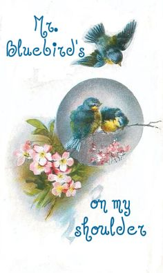 Bluebirds...