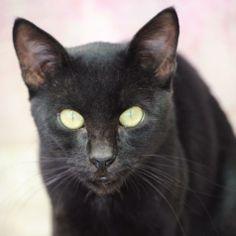 MALCOM - Gato adoptado - AsoKa el grande