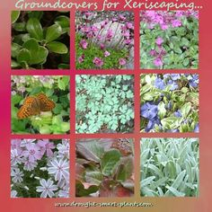 9 of the Best Low Growing Plantsfor your Xeriscape Landscape  Read more: http://www.drought-smart-plants.com/groundcovers-for-xeriscaping.html#ixzz3MCFEMnxP Choose some of these plants that have been tested and trialed in my Zone 5 xeric garden...9 από τα καλύτερα φυτά χαμηλοί ανάπτυξη  για Xeriscape τοπίου σας