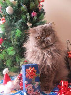 My Christmas Cat
