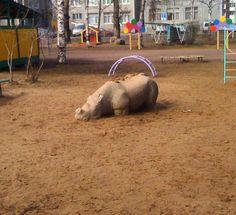 еще из советского прошлого встретили сегодня за оградой детского сада печального очень красивого носорога хотелось его увести с собой #носорог #ссср #rhinoceros #родомиздетства #childhood by block_print