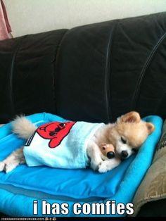 So Very Comfy!