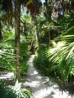 jungle garden path