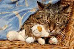 Does Your Cat Have IBS Or IBS? Get The Scoop On Feline Digestive Disorders www.NaturalCatFoodStore.com