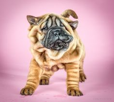 Adorable Photos Of Puppies Making Funny Faces While Shaking Themselves Dry