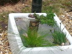 Belfast sink pond … - Garden İdeas Natural Belfast Sink Garden Pond, Belfast Sink Water Feature, Belfast Sink Planter, Garden Sink, Rockery Garden, Bog Garden, Garden Planters, Water Garden, Gravel Garden