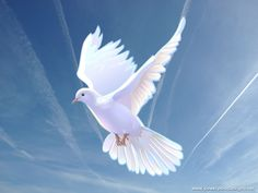 Come Holy Spirit, Heavenly Dove with all thy quickening power, kindle a flame of burning love in these young hearts of ours.