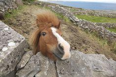 An Irish Pony in Connemara