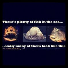 There's plenty of fish in the sea...