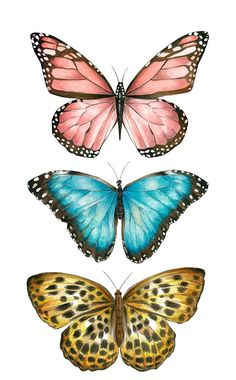 Ilustração by Bianca Pozzi.Bianca Pozzi on We Heart ItDelicados & Coloridos Source by I do not take credit for the images in this post.ImageFind images and videos about butterfly on We Heart It - the app to get lost in what you love. Butterfly Images, Butterfly Drawing, Butterfly Painting, Drawings Of Butterflies, Butterfly Quotes, Pink Butterfly, Aesthetic Iphone Wallpaper, Aesthetic Wallpapers, Art Papillon