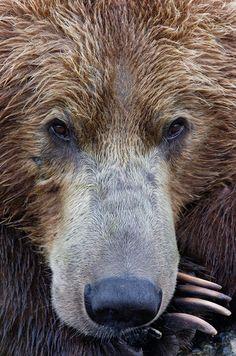 Bored bear!