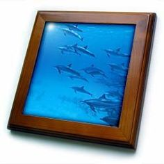 "Africa, Egypt, Red Sea. Spinner dolphins-AF14 SWE0035 - Stuart Westmorland - 8x8 Framed Tile by 3dRose. $22.99. Inset high gloss 6"" x 6"" ceramic tile.. Keyhole in the back of frame allows for easy hanging.. Solid wood frame. Dimensions: 8"" H x 8"" W x 1/2"" D. Cherry Finish. Africa, Egypt, Red Sea. Spinner dolphins-AF14 SWE0035 - Stuart Westmorland Framed Tile is 8"" x 8"" with a 6"" x 6"" high gloss inset ceramic tile, surrounded by a solid wood frame with pre-drilled ..."