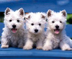 Aunque En Todo-Mail hemos publicado muchas imágenes de lindos cachorros, estos podrían ser los más adorables de todos. Echa un vistazo a estas 23 fotos para ver si tu opinas lo mismo.