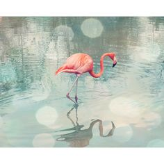 coral turquoise flamingo photograph salmon light peach teal turquoise chic mint teal office