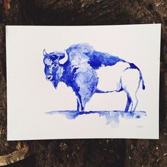 15 min to keep things loose. #watercolor #bison