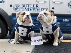 Butler University mascots Blue II & III (Trip) at NPR HQ in Washington, DC. @Butler Blue II