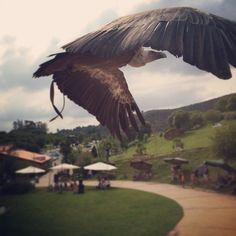 La del buitre #summer #santander #buitre #bird #cantabria #cabarceno #zoo #fly #iphoneonly #iphonesia #photooftheday #sunset
