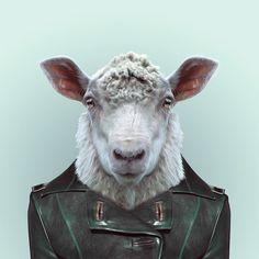 Yago Partal, Zoo Portrait : Sheep