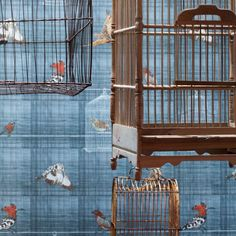 Bird cages wallpaper collection by Chapman collections Bird Wallpaper, Bird Cages, Home Appliances, Birds, Collection, House Appliances, Bird Cage, Appliances, Bird