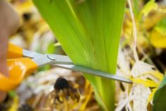 How to Care for Iris Plants After Bloom