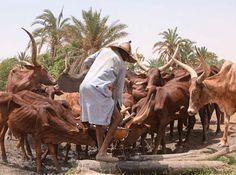 Ondo Director Of DSS Raises Concern Over Incessant Fulani Herdsmen Attack On Farmlands