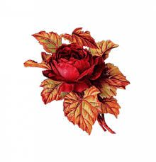 Hasil gambar untuk pink flowers decoupage
