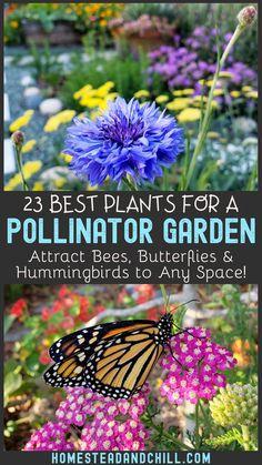 Top 23 Plants for Pollinators: Attract Bees, Butterflies, & Hummingbirds! ~ Homestead and Chill - Pollinators are essen Garden Help, Bee Garden, Plants, Cool Plants, Backyard Garden, Organic Gardening, How To Attract Hummingbirds, Garden, Gardening Tips