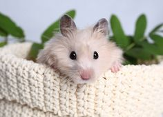 7 Tips for Taking Care of Your Hamster | Pets & Pets Care