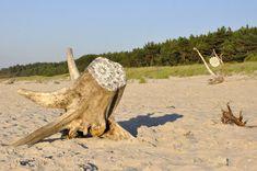 Stunning: Driftwood Doilies